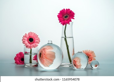 Still life with glass vases of various shapes and gerbera daisy flowers