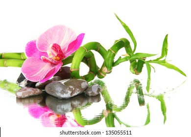 Still life with green bamboo plant, orchid and stones, on white background