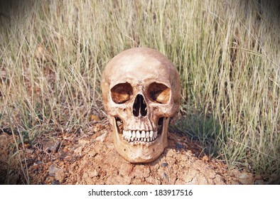 still life with human skull in dry field background.(retro filter effect)