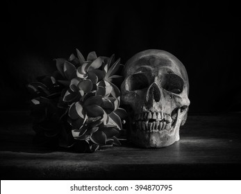 Still Life Black White Photography Human Stock Photo Edit Now