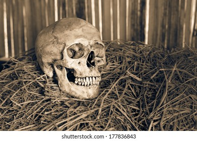 Still life,  human skull on straw in farmer barn