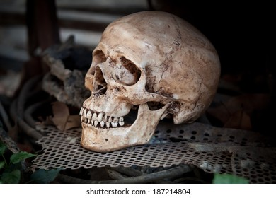 Still life with human skull on metal sheet