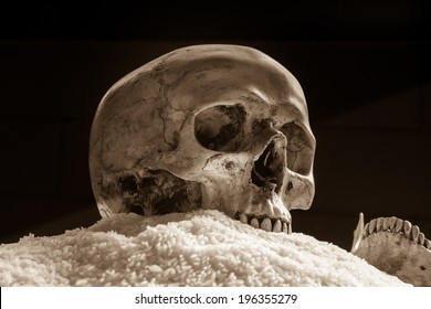 Still life with human skull on pile of rice