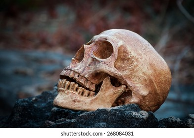 Still life, human skull on the rock
