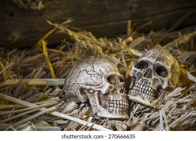Still life, human skull on straw