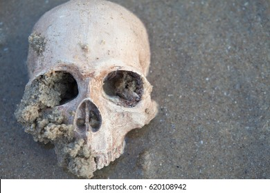 Still Life ,Human Skull on the Sand Beach