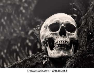 Still life image of human skull on wood with copy space.Black and white or vintage color tone of skull that look like he or she are smiling.Elegant and horror,concept of Dhamma or nature life .
