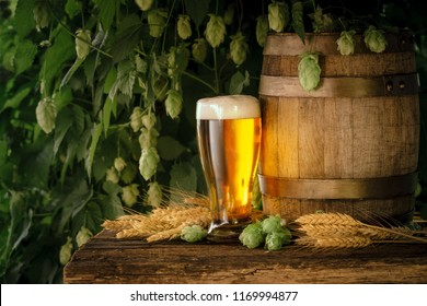 Still Life with a keg of beer and draft beer in the glass on wooden rustic table in front of hop plantation.