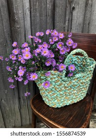 Still life with lilac asters in a wicker turquoise vintage bag on a wooden chair against an aged wooden wall background