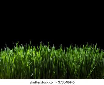 Still Life of Lush Green Grass at Night