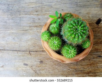 still life natural cactus plants on wooden background textured