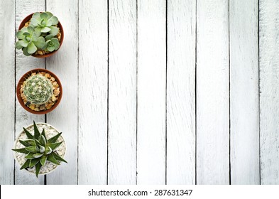 Still Life Natural Three Cactus Plants on Vintage White Wood Background Textured