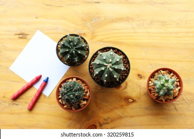 Still Life Natural Three Cactus Plants on Vintage White Wood Background Texture with Note Paper