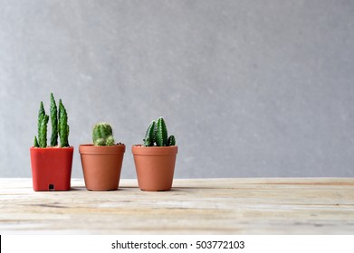 still life natural three cactus on wooden table