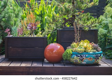 Still life on a backyard deck with succulents and a red reflection globe.
