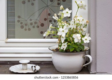 A still life on a windowsill with a flower pot (shape of a chamber pot) and a candlestick.