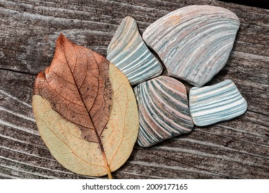 Still life on wooden surface. Leaf and surf worn shells.