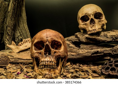 still life painting photography with couple human skull on dried leaves art abstract background, love concept, grunge, vintage and dark tone for horror halloween