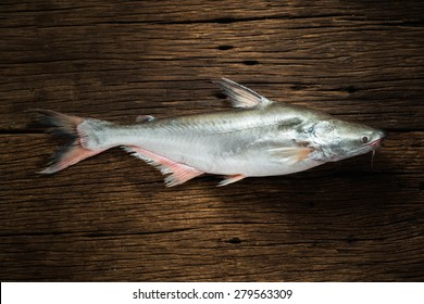 Still life Pangasius conchophilus on old wood background