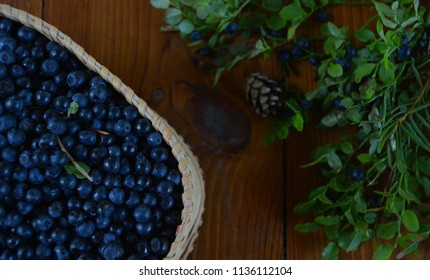 A still life with a pannier of forest blackberries, a cone and blackberry branches. Holidays. 22 July - the blackberry harvest day (Cyril and Pancratius day in Orthodox church).