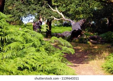 Still life in the park