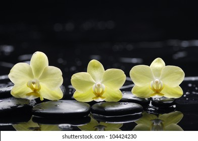 still life with pebbles and three orchid