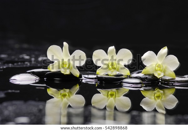 still life with pebbles and three white orchid