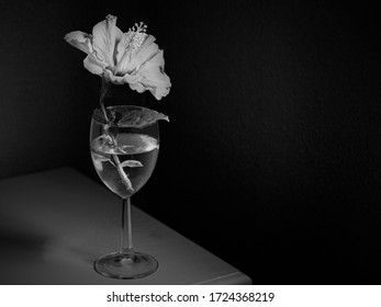 Still life photograph of a hibiscus flower in a wine glass on a table photographed in black and white using window light.