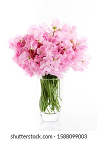 Still life photography of pink sweet pea cut flowers in glass vase floral arrangement on white background