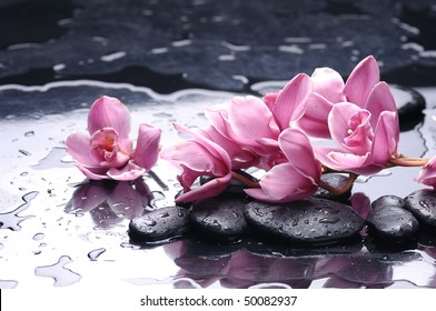 still life with pink orchid flower