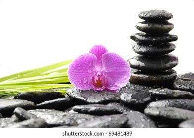 Still life with pink orchid on wet  stacked stones and green palm leaf