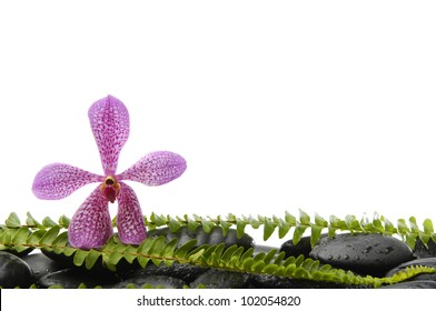 Still life with Pink orchid and stones with green fern