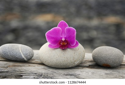 Still life with Pink orchid with three stones on old tree background