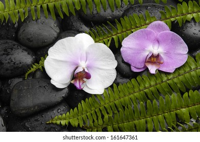 Still life with pink and white orchid with green fern on pebbles