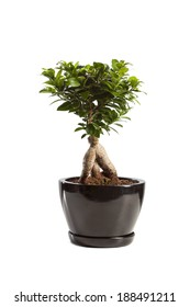 Still Life Potted Plant Isolated Over White Background