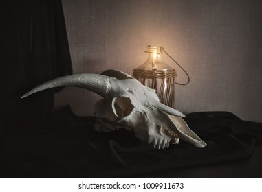 Still life with ram skull and old bottle and candle on dark background