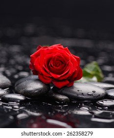 Still life with Red rose and wet stones