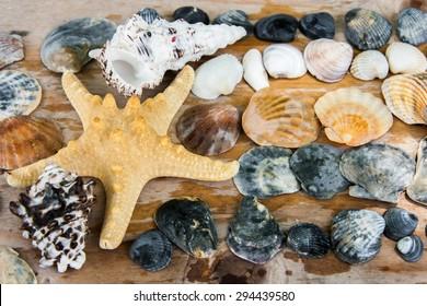 still life of shells and starfish