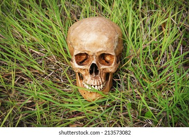 still life with skull human in meadow.