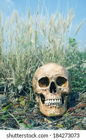 still life with skull human on dry ground and dry field with blue sky.final destination concept.(retro filter effect)