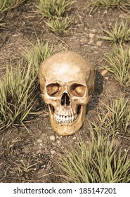 still life with skull human on grassland in sepia filter effect.