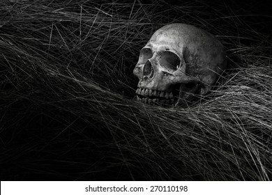 still life of skull on black and white