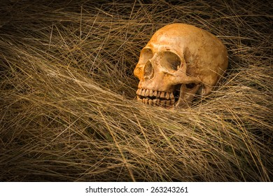 still life of skull on dried grass