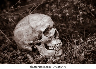 Still life, skull on dry flowers in the park