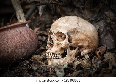 Still life with skull on dry leaves and clay pot in the park