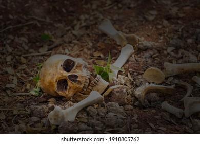 Still life of skull on ground
