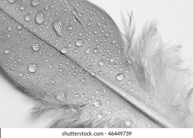 A Still Life of Soft White feathers