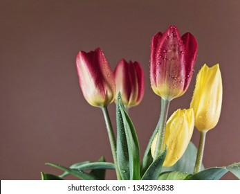 Still life with spring tulips with water drops