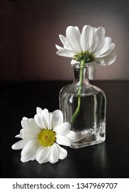 Still life with two white daisy flowers in the small vintage glass botlle against a low key background. Choose a focal point.