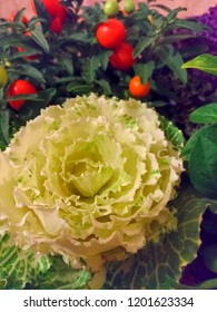 Still life of vegetables a large flower made from cabbage leaves cherry tomatoes and leaves, decorative decoration of a dish, a festive table